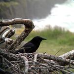 Birding: Image 10 of 12