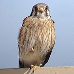 Birding: Image 2 of 12
