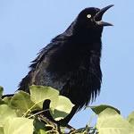 Birding: Image 3 of 12