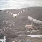 Birding: Image 4 of 12