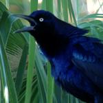Birding: Image 6 of 12