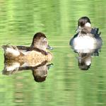 Birding: Image 7 of 12
