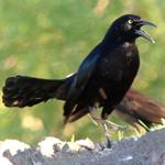 Birding: Image 8 of 12