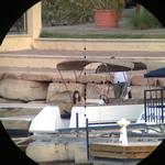 Surveillance: Image 4 of 7